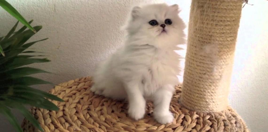 chaton mignon - tunisie